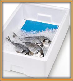 absorbente pescado con marco 5